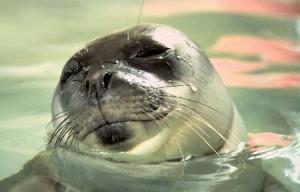 Bibione foche monache adriatico
