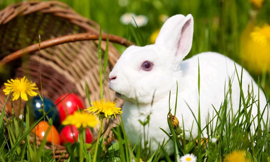 Bibione Pasqua 2014 auguri